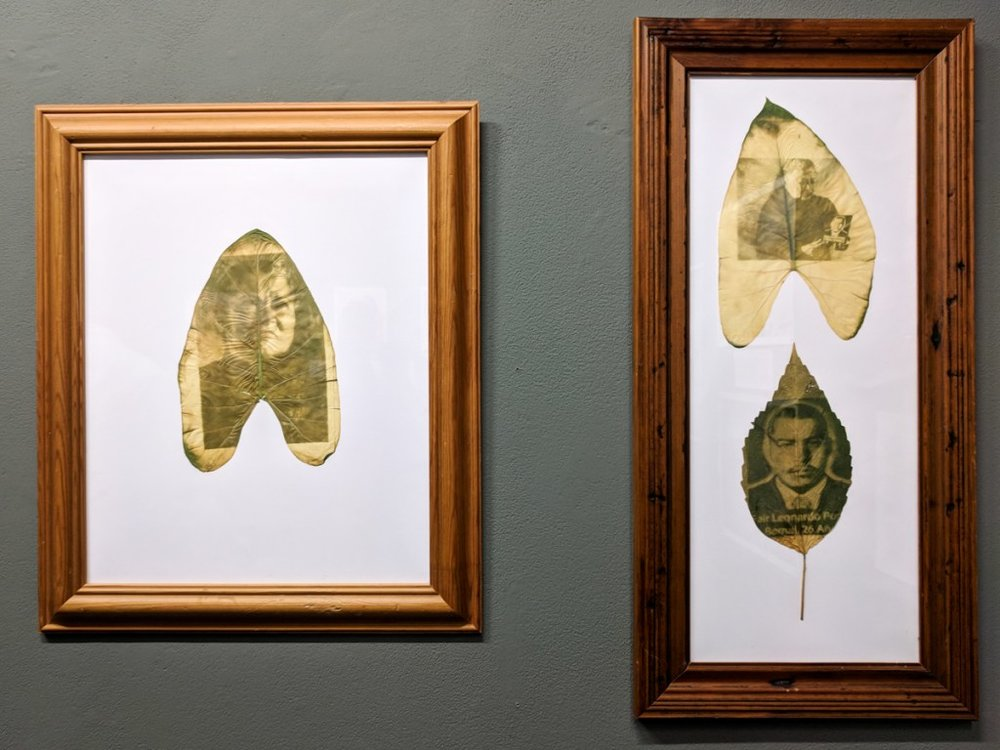 Chlorophylle printing of Luz Marina Bernal from the Mothers of Soacha